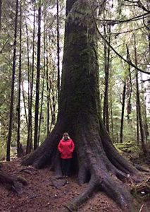 Helen standing in front of Tall tree